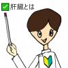 【一般・初心者向け】肝臓の働きや肝機能検査について